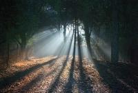 diffusione luminosa